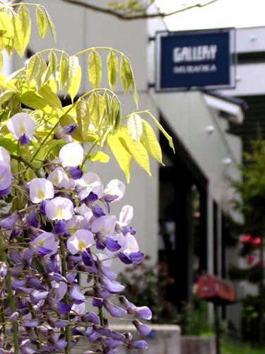 そろそろ藤の花が..._f0092382_13242017.jpg