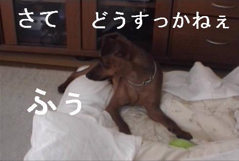 f0123589_14295245.jpg