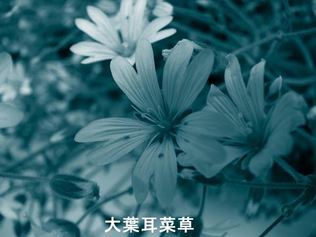 f0099535_19283210.jpg