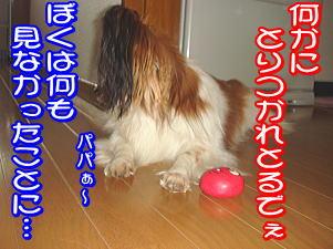 f0011845_23225196.jpg