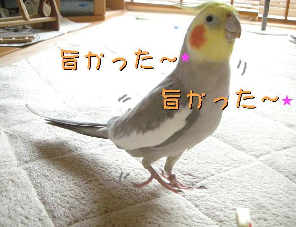 f0132055_049795.jpg