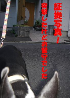 f0110199_2291825.jpg