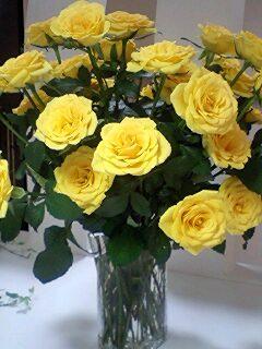 The yellow rose_f0126121_0253937.jpg