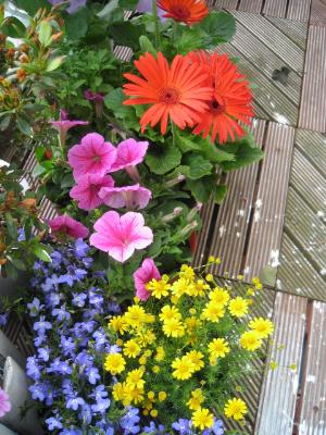 まだ白く塗られていない、ウッドデッキの上に並べられた花たち。オレンジのガーベラに、小さなキク科の花、ブルーの小花、朝顔を小さくしたようなピンクの花、白いデッキの上でも映えそうな色合いばかりを買ってきました。