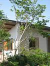 オープンハウス/浜松 S邸/繋がるhanare_c0089242_18282548.jpg