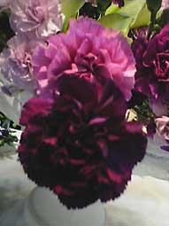 FLOWER展_d0069964_10452174.jpg