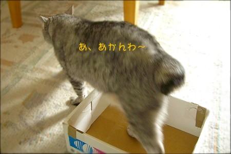 d0005397_22344359.jpg