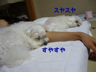 f0005727_16542728.jpg