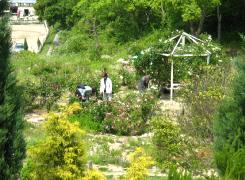 各種ハーブやバラが育てられているガーデン。苗木やハーブを買うことも出来ます。