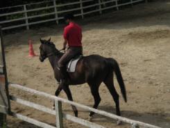 レッスン中の乗馬風景。赤いポロシャツを着た男性がレッスンを受けていました。栗毛色の馬にまたがっています。