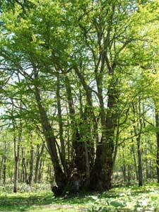 森の神様!_f0096216_2051274.jpg