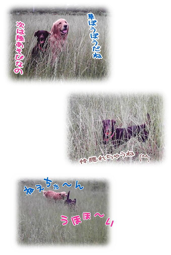 f0109418_1591276.jpg