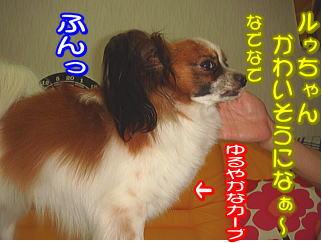 f0011845_1593444.jpg