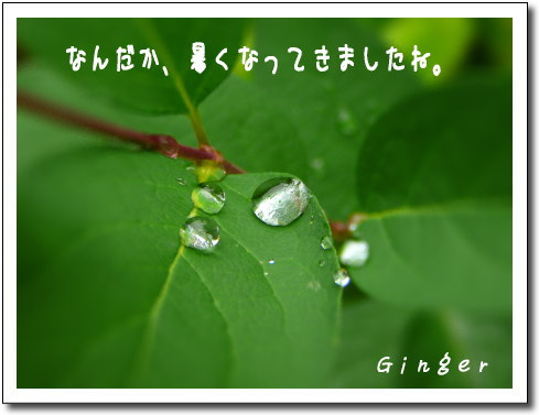 b0066947_2050214.jpg