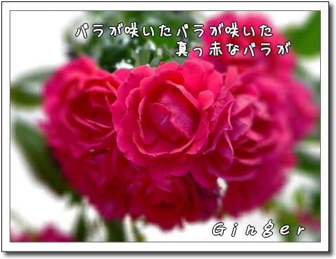 b0066947_20503640.jpg