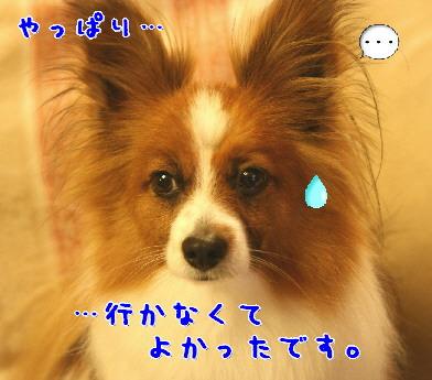 d0013149_0453582.jpg