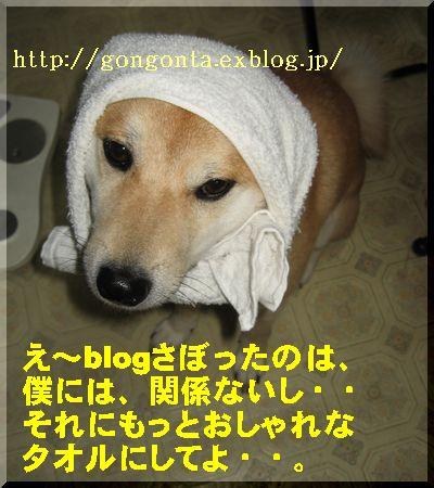e0085147_1182511.jpg
