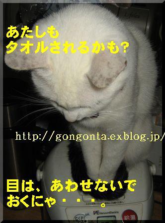 e0085147_1194029.jpg