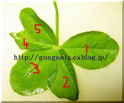 e0085147_153434.jpg