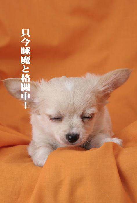 今日は朝から眠い!_d0101050_2065714.jpg