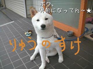 f0132055_0412258.jpg