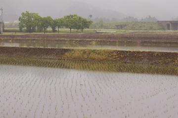 山菜採り行脚@新潟(2日目)  そして雨。_f0057564_081674.jpg