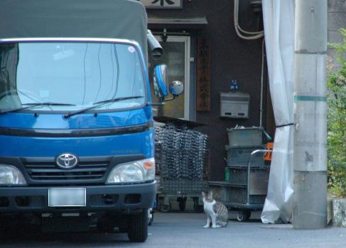工場前の猫_e0123176_12543355.jpg