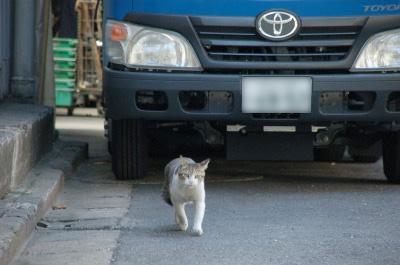 工場前の猫_e0123176_12552738.jpg