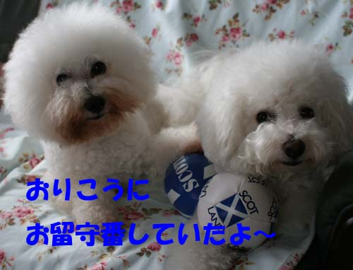 c0086880_1533528.jpg