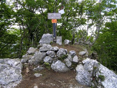 駒ヶ岳 ブナ林_e0048413_21362446.jpg