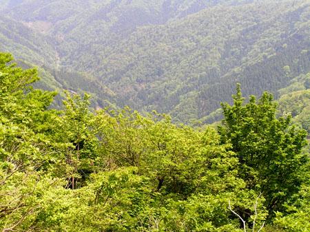 駒ヶ岳 ブナ林_e0048413_21364121.jpg