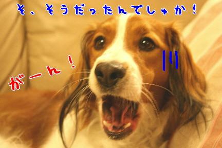 d0013149_8475767.jpg