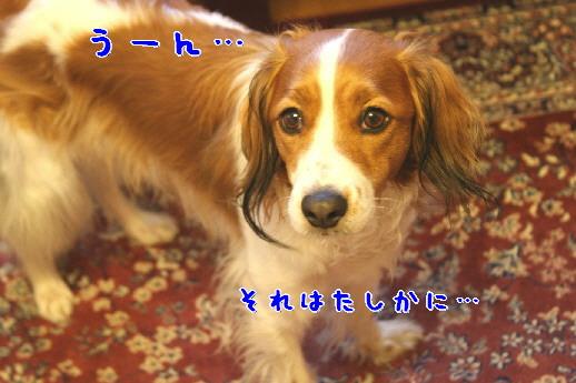 d0013149_8504743.jpg