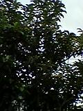 d0109373_18312363.jpg