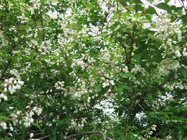 金時山の花  Vol 19_e0024094_14323574.jpg