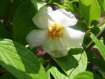 開花の季節と頭の食育_c0120834_12495790.jpg
