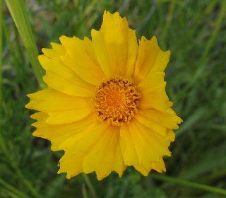 出先で見たお花と、可愛い車掌さん♪_e0098241_15542151.jpg