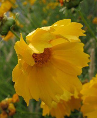 出先で見たお花と、可愛い車掌さん♪_e0098241_1555053.jpg