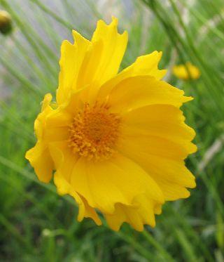 出先で見たお花と、可愛い車掌さん♪_e0098241_15551962.jpg