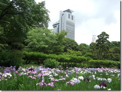5月7日小石川後楽園