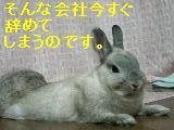 f0104057_043621.jpg