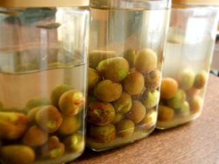 自家製酵母(梅)2007 液種仕込み_c0110869_12452766.jpg