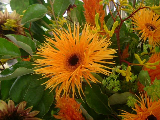 オークリーフ(EL SOLさんオープンのお花)_f0049672_17213577.jpg