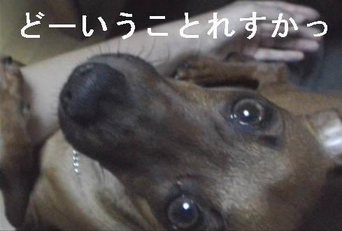 f0123589_16492312.jpg
