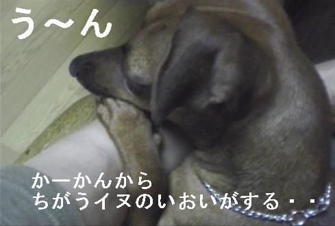 f0123589_1649554.jpg