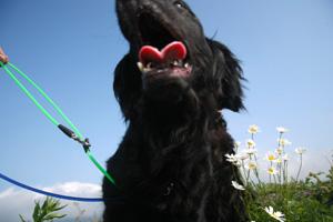 カーラさん愛犬撮影会に参加!_b0084194_15114473.jpg