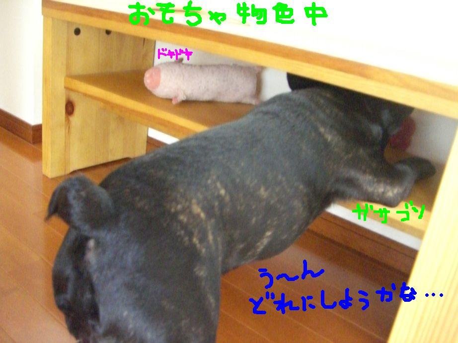 c0113109_2255360.jpg