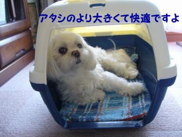f0005727_1685911.jpg
