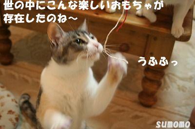 f0063729_1173292.jpg