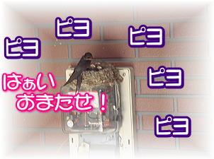 f0011845_23245575.jpg